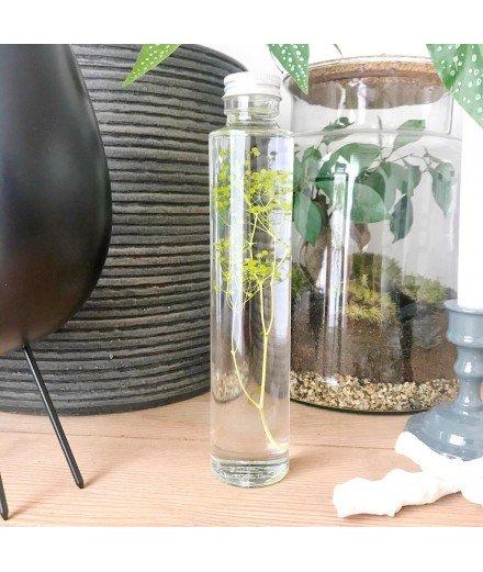 Plante immergée en fiole 200 mL - Gypsophile