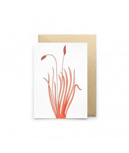 Carte double - Fleur Colossale