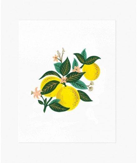 Affiche fleurs - Lemon Blossom (LMvannes)